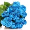 3 holland blue rose